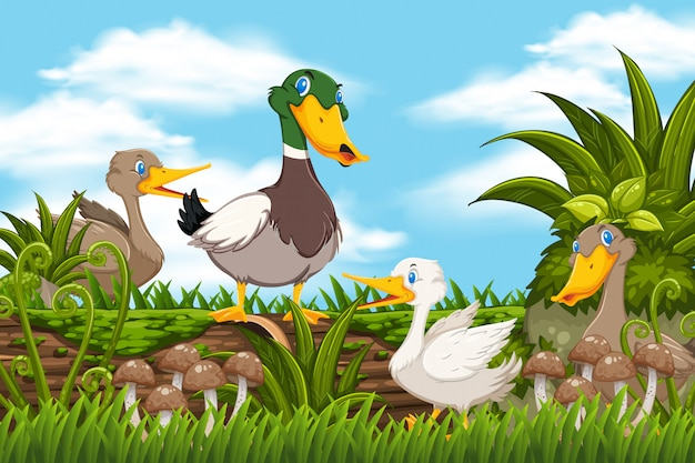 Patos na cena da floresta
