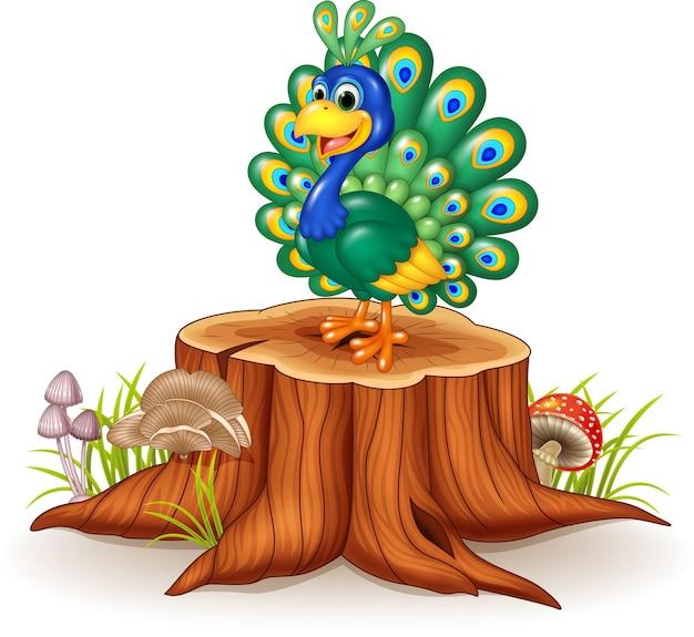 Pavão bonito no coto de árvore
