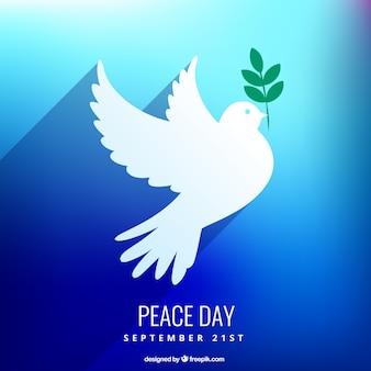 Paz cartão do dia