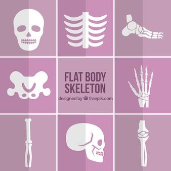 Peças de esqueleto em design plano