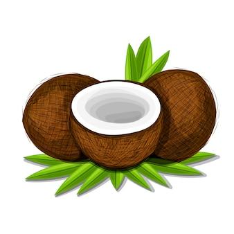Pedaços de coco com folhas isoladas no fundo branco.