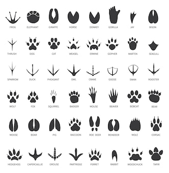 Pegadas de animais