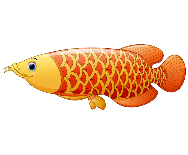 Peixe aruanã
