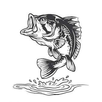 Peixe baixo