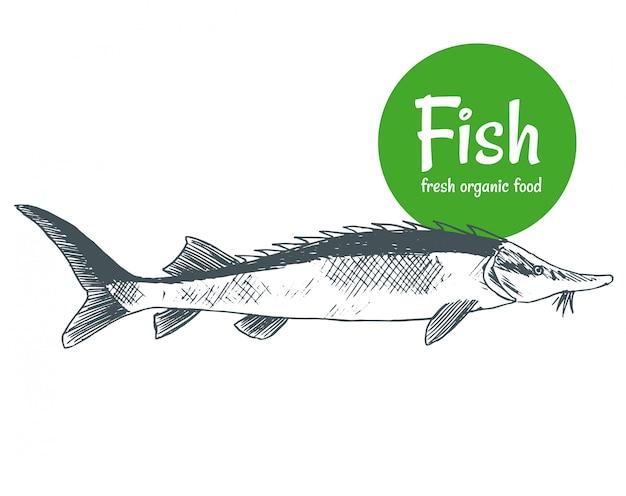 Peixe desenhado de mão. cartaz de loja de produtos de peixes e frutos do mar. pesca de frutos do mar e pesca oceânica. pode usar como menu de peixe de restaurante ou banner de clube de pesca