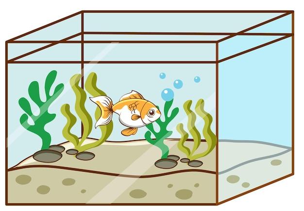 Peixe dourado fofo nadando no tanque