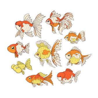 Peixe dourado.