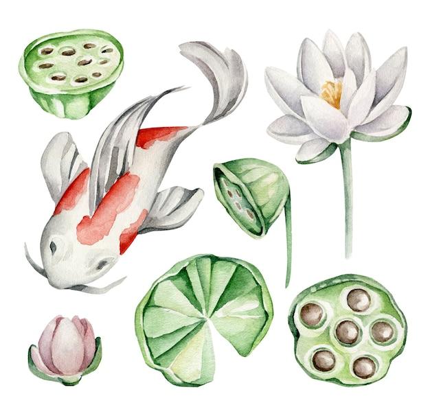 Peixe koi, flor de lótus, folhas de lótus