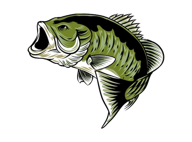 Peixe largemouth isolado no branco