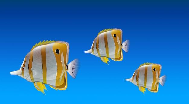 Peixes borboleta