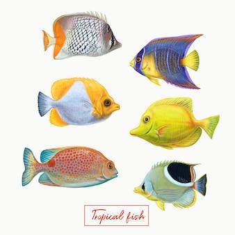 Peixes coloridos tropicais