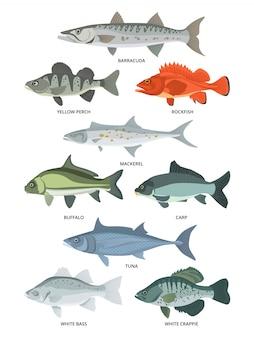 Peixes de água doce e oceano