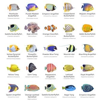 Peixes de aquário subaquático asiático exóticos e tropicais coloridos brilhantes com os nomes, clownfiah, angelfish, tang, lionfish, butterflyfish