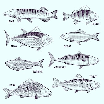 Peixes de mão desenhada. restaurante menu frutos do mar, salmão, atum e cavala esboçar elementos isolados do vetor