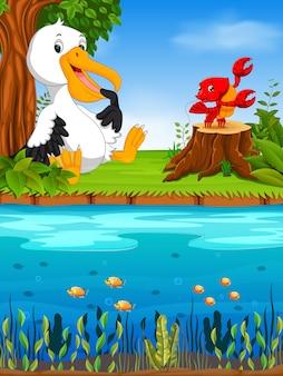 Pelicano bonito e lagosta no rio