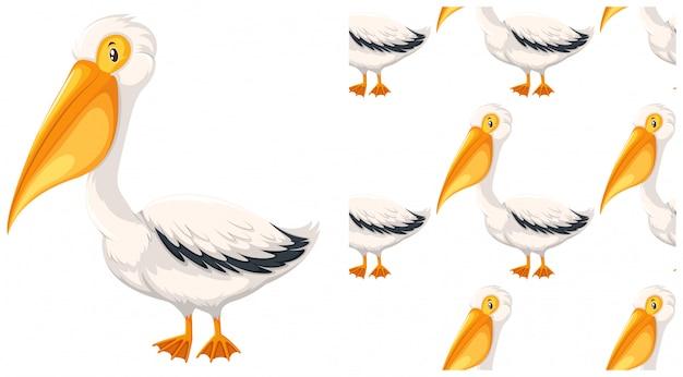 Pelicano isolado no branco