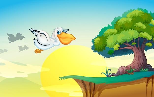 Pelicano voando