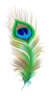 Pena de pavão. pena de pássaro bonito