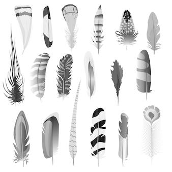 Penas de aves de cor preto e branco