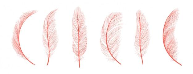 Penas de coral na moda. penas caídas rosa isoladas no fundo branco