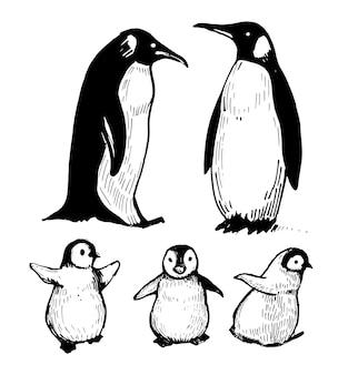 Penguins. ilustração de mão desenhada.