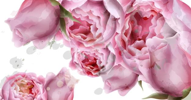Peônia flores em aquarela de fundo