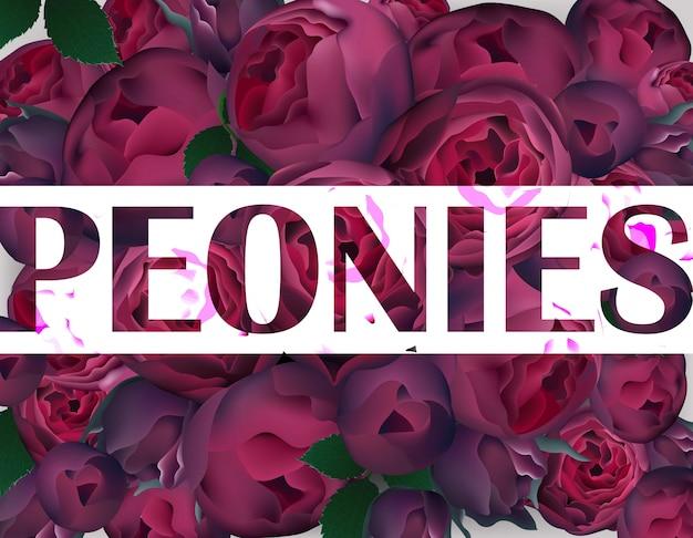 Peonies background vector background realista. cores roxas