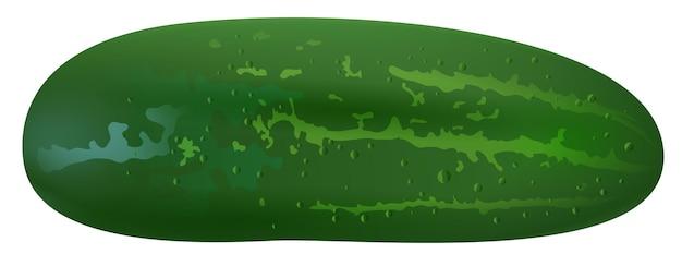 Pepino verde isolado. maxixe fresco