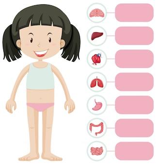 Pequena menina e diferentes partes do corpo