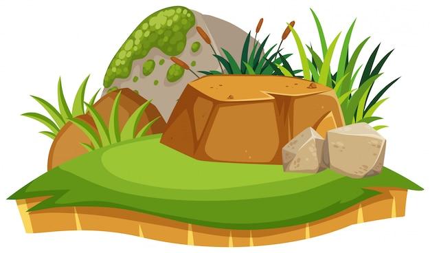 Pequenas rochas e plantas isoladas