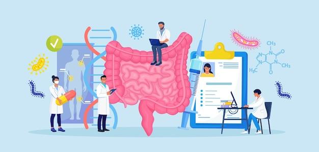 Pequenos médicos examinando o trato gastrointestinal e o sistema digestivo. diagnóstico e tratamento do intestino. inflamação intestinal, enterite, colite, disbacteriose