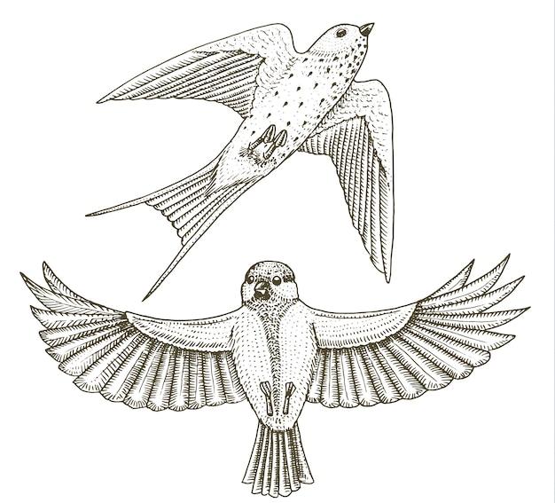 Pequenos pássaros de andorinha ou martlet e parus ou chapim ou chapim na europa. ícones de animais tropicais exóticos.