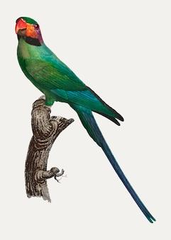 Periquito-de-cabeça-de-flor