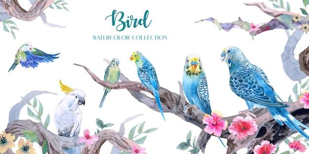 Periquitos de beleza e aquarelas de papagaio em uma selva com um conjunto de ramos curvos e flores.