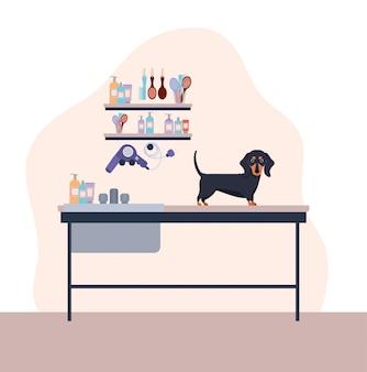 Personagem de animal de estimação bonito cão dashhund