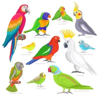 Personagem de papagaio de vetor de papagaio e pássaro tropical ou desenho animado
