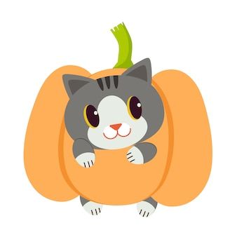 Personagem dos desenhos animados do gato bonito brincar com a abóbora.