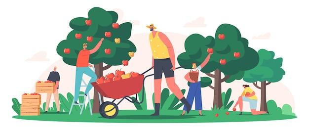 Personagens coletando maçãs no jardim ou pomar, jardineiros coletando frutas, produção agrícola ecológica e saudável. trabalho sazonal, agricultura, colheita de outono. ilustração em vetor desenho animado