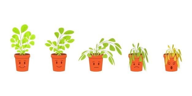 Personagens fofos de plantas de casa em vasos florescendo e morrendo sem cuidados fases de plantas murchando Vetor Premium