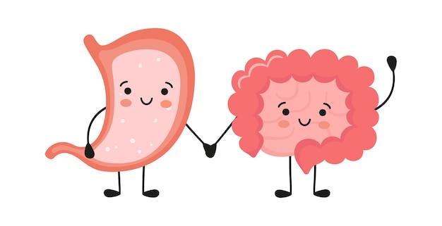 Personagens saudáveis e felizes e sorridentes de estômago e intestino de mãos dadas