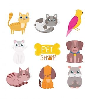 Pet shop, animais fofos gato cachorro pássaro roedor comida clínica veterinária