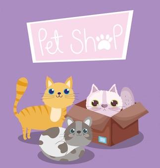 Pet shop, gato em caixa de papelão e desenhos animados domésticos de animais de gatinho