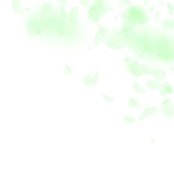 Pétalas de flores verdes caindo. canto adorável de flores românticas. pétala voando sobre fundo quadrado branco. amor, conceito de romance. convite de casamento divertido.