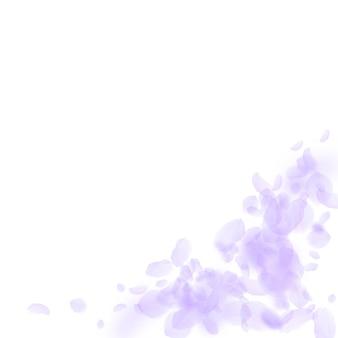 Pétalas de flores violetas caindo. canto de flores extra romântico. pétala voando sobre fundo quadrado branco. amor, conceito de romance. convite de casamento vivo.
