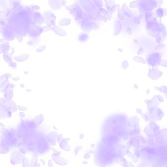 Pétalas de flores violetas caindo. vinheta de flores românticas interessantes. pétala voando sobre fundo quadrado branco. amor, conceito de romance. convite de casamento bonito.