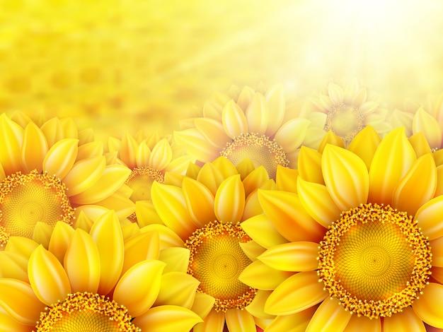 Pétalas de girassol com sol de verão.