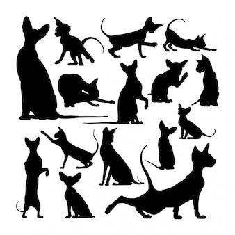 Peterbald gato animal silhuetas
