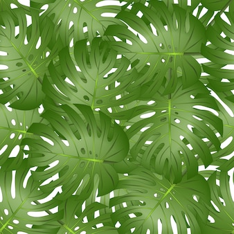 Philodendron monstera leaf seamless isolado