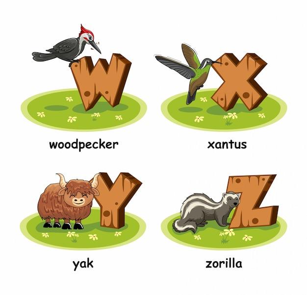 Pica-pau xantus pássaro iaque zorilla alfabeto madeira animais