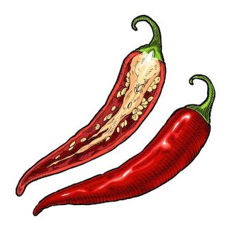 Pimenta malagueta inteira e meio. ilustração em vetor vintage para incubação de cores. isolado em um fundo branco. desenho desenhado à mão
